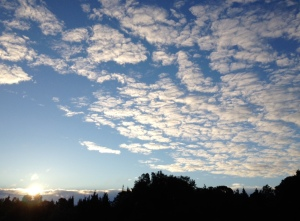 The sky on the way to the vineyard. Running has really made me appreciate nature's beauty more!